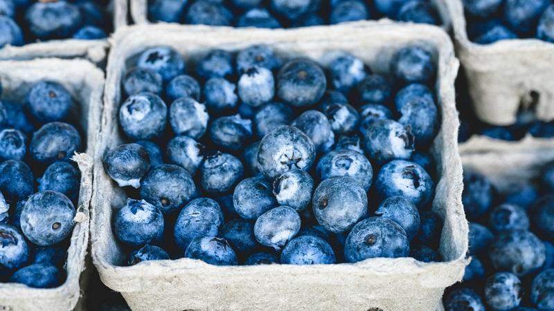Broom Logistics participará en Ciclos Frutícolas de Asoex para impulsar la exportación de arándanos