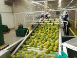 Colombia: Exportan 23 toneladas de naranjas desde Puerto de Barranquilla
