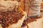 Venezuela: Exportan 150 toneladas de cacao a través de Puerto de la Guaira