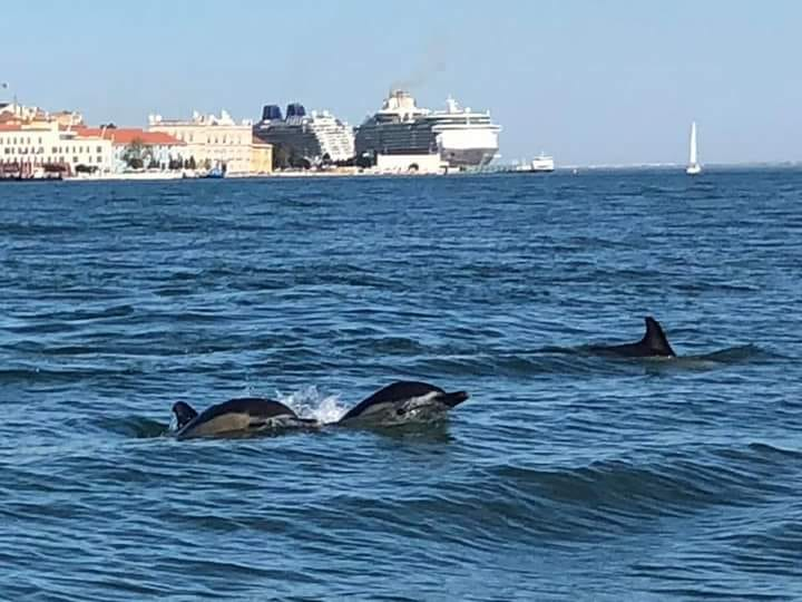 Delfines y cruceros en el Puerto de Lisboa