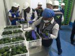Colombia: Habilitan zona de resguardo para embarques de palta Hass en Puerto de Buenaventura