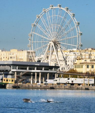 Delfines en el Puerto de Málaga