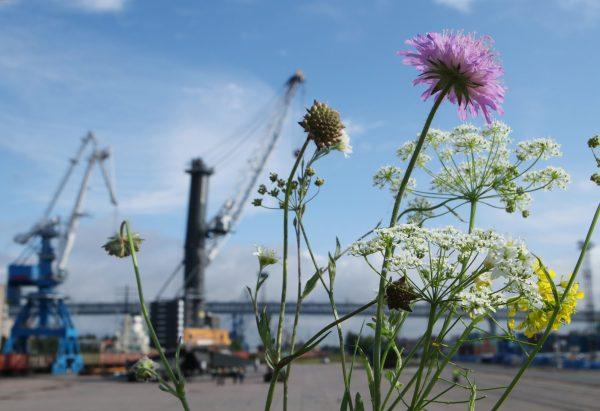 Rusia: Puerto de St. Petersburg incrementa su inversión en protección ambiental
