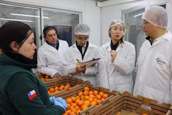 Delegación de Aduana china verifica proceso de proceso de producción y exportación de cítricos chilenos