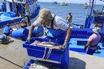 Perú: Exportaciones de calamar gigante aumentarían en 20% durante 2019