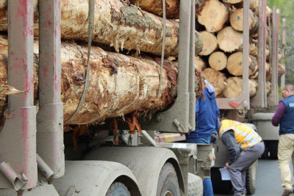 Exportaciones forestales chilenas caen 17,2% durante 2019
