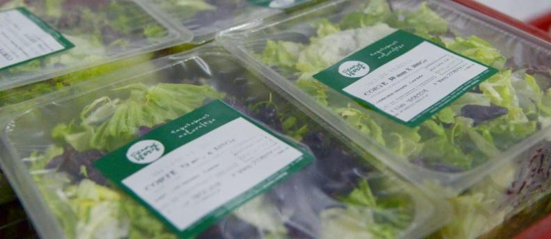 Argentina: Exportaciones de hortalizas frescas aumentan 11% entre enero y octubre