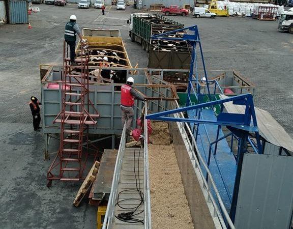 Segundo embarque vaquillas Talcahuano TTP (7)