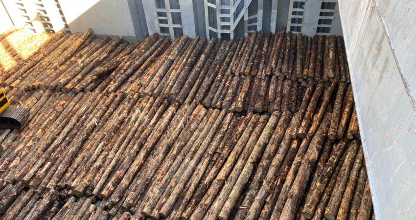 primer embarque troncos puerto montt (4)