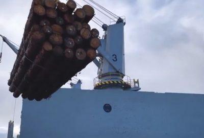 Desde el sur de Chile al mundo: El embarque de Pino Radiata hecho en Puerto Montt